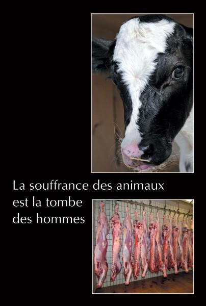 La souffrance des animaux est la tombe des hommes