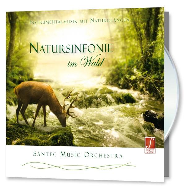 Natursinfonie im Wald